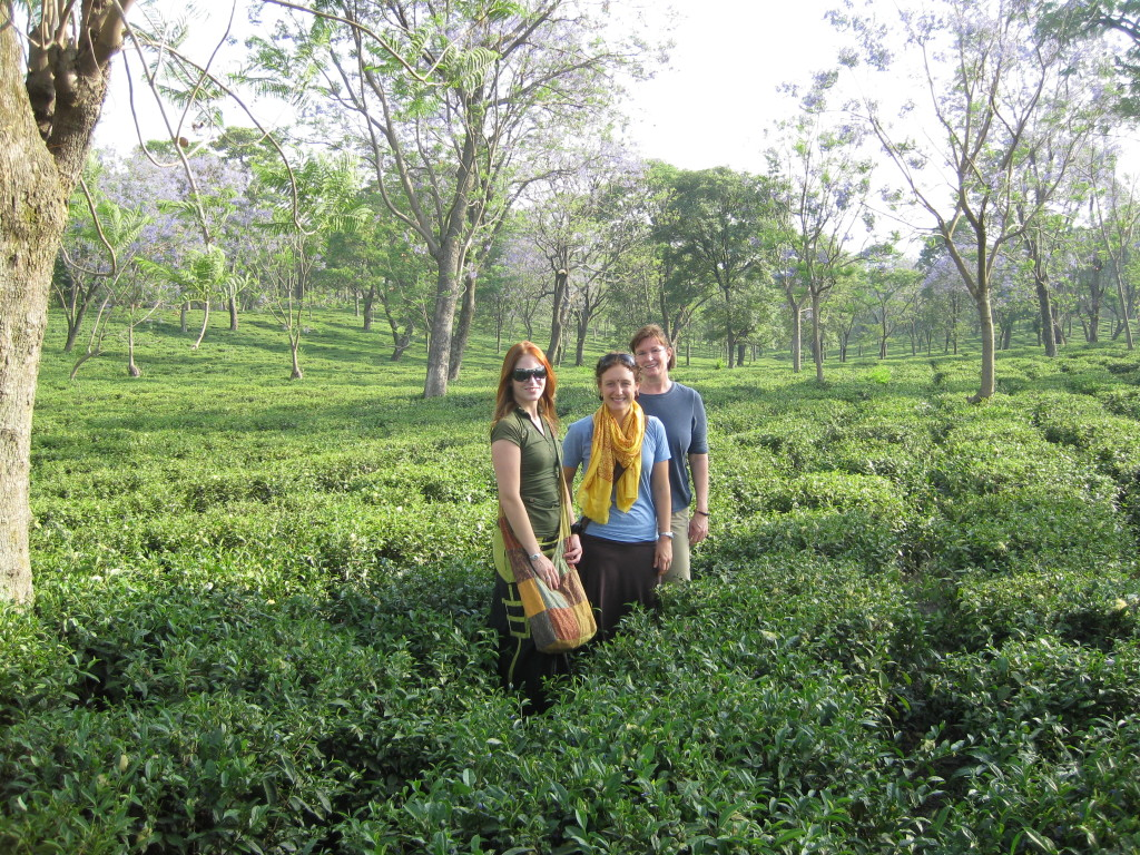 Palampur - Tea Garden with volunteering India