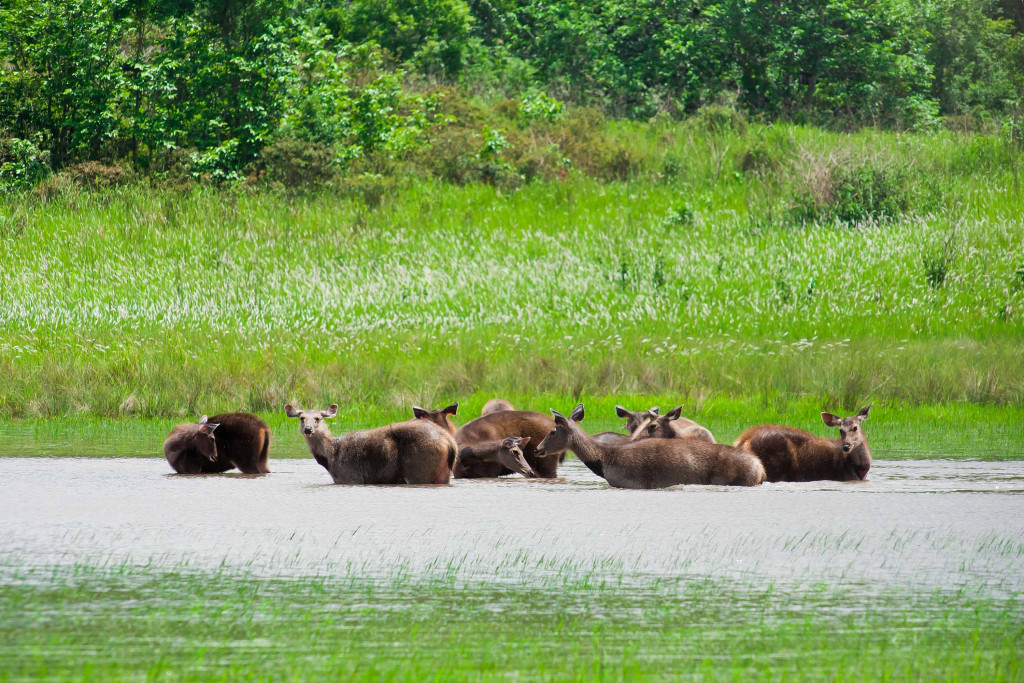 Animals-at-Sundarbans-Forest