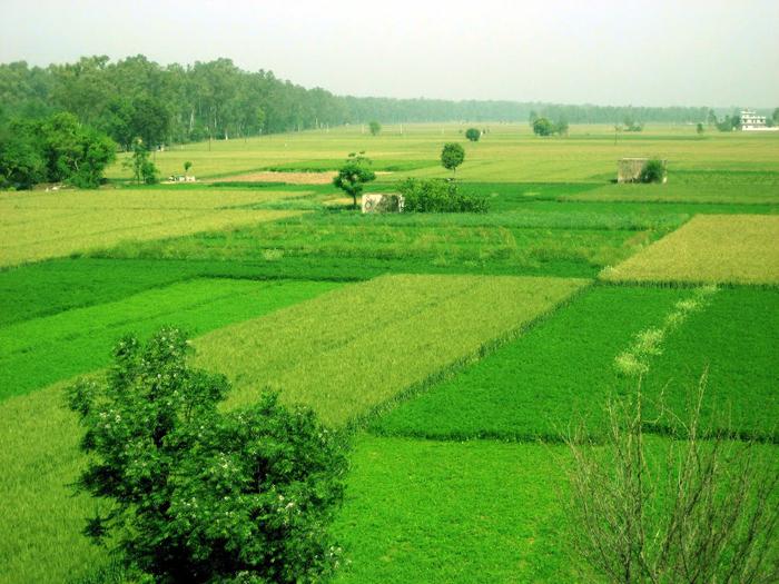 Farms of Punjab