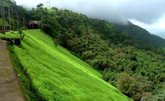 india greenary