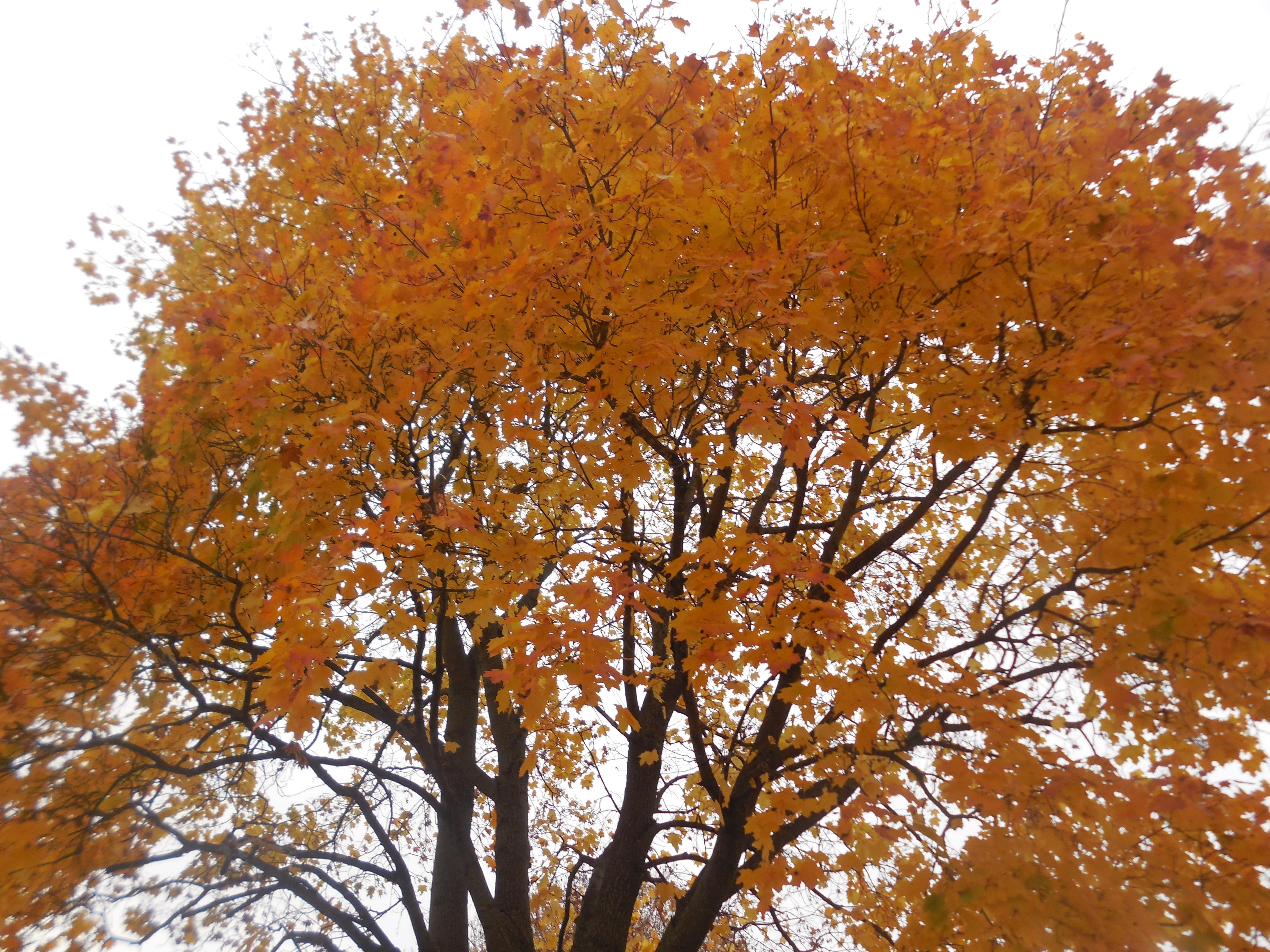describe autumn season in india Learn english basics - the seasons an english summer, autumn, winter and spring.