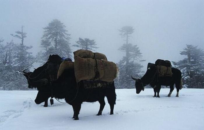 kanchenjunga-national-park-sikkim