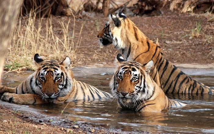 sundarbans-national-park-animal